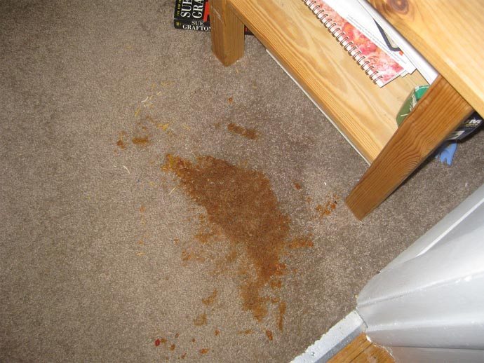 How To Remove Stains From Your Carpet