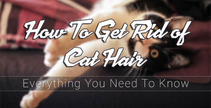 how-to-get-rid-of-cat-hair